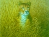 6 Gepard__Größe: 40x40cm__Preis: 120€ (o.R.)