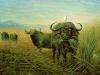 14 Kaffernbüffel mit Kuhreiher__Größe: 70x50cm__Preis: 180€ (o.R.)