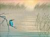 Eisvogel am Wasser