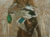 48 Junger Setter mit Ente__Größe: 40x30cm__Preis: 200€ (m.R.)