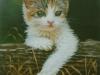 52 Kätzchen 1__Größe: 15x10cm__Preis: verkauft