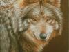 59 Mexikanischer Wolf__Größe: 24x18cm__Preis: 130€ (m.R.)